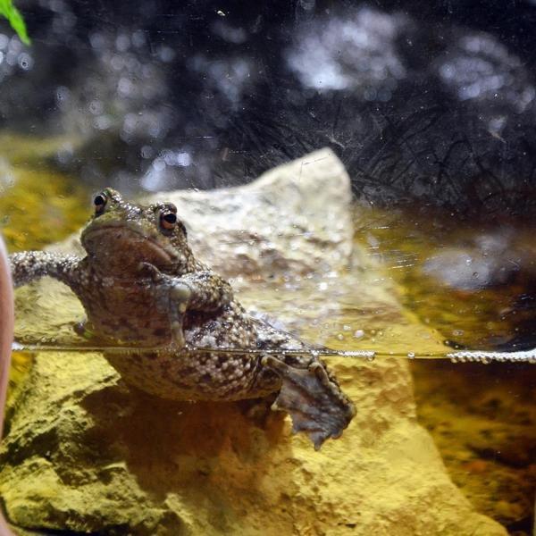 Frosch - Workshop Moorlandschaft