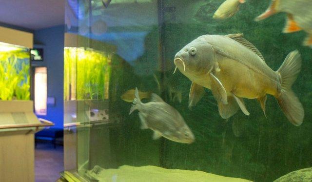Futter für die Fische